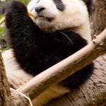 San Diego Zoo 029