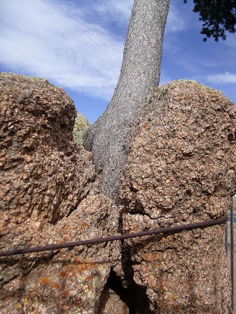 Tree Rock 3