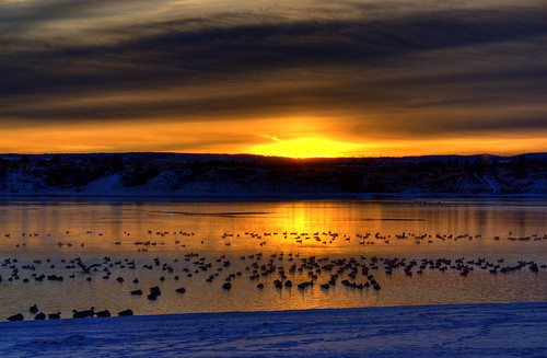 blue orange lake snow reflection ice beach water birds animal yellow clouds sunrise gold geese colorado snowy flock denver icy chatfield canadageese littleton 200712