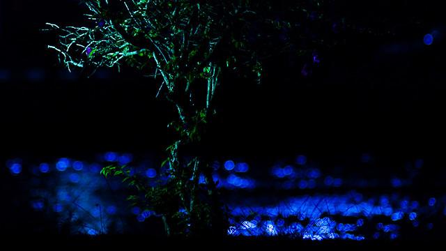 Glittering Bougainvillea (DSC_7704)