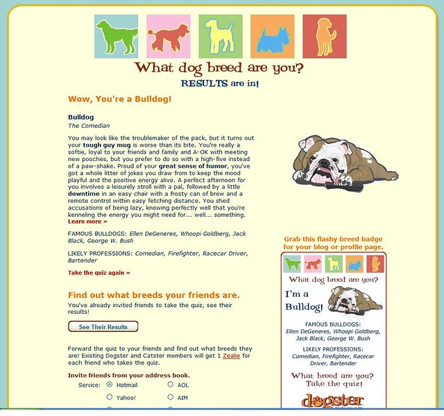 Dog Breed Info German Wirehaired Pointer