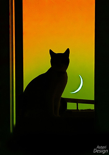 Rising Moon, Watchful cat