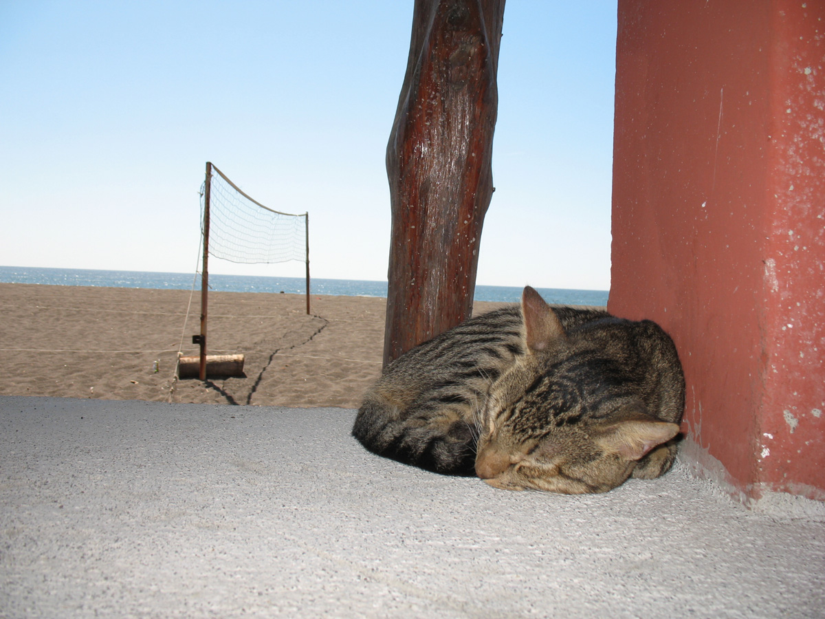 Lazy Cat at the Bar