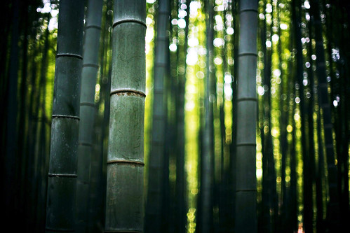 colors of bamboo* 03