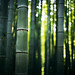 colors of bamboo* 03 by * tathei *