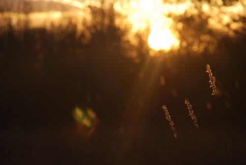 sunset mississippi tupelo d80