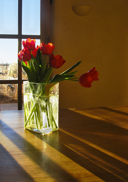 sunlight kissed the tulips
