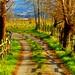 El camino verde by Ignacio Lizarraga