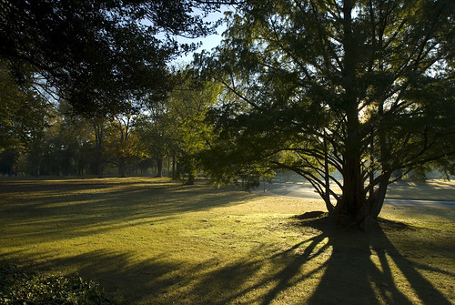park morning light shadow sun tree green grass sunrise landscape gold virginia nikon glow richmond va d200 metasequoia byrd polarizingfilter dawnredwood dogwooddell 1735mmf28