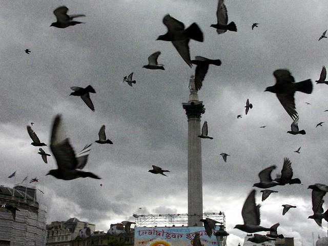 Palomas en vuelo en Trafalgar Square para la celebración