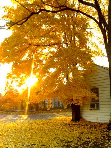 autumn yellow sunrise moblog newjersey tagalongproject matawan v3x motorolav3x