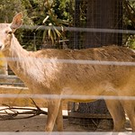 San Diego Zoo 072