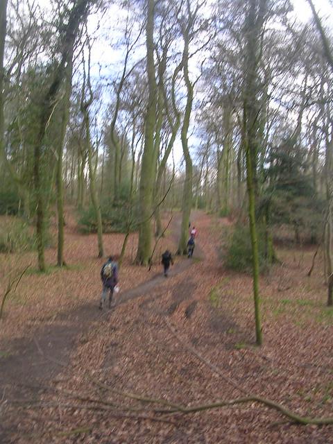 Through Lambridge Wood