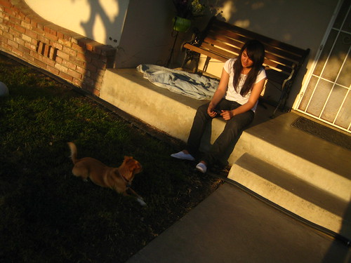 california family sunset chuck lopez porterville chihuahuaterrier katielopez leahlopez