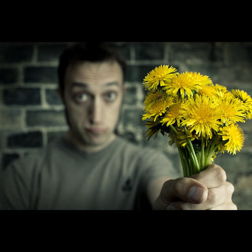 115/365 A dandelion apology