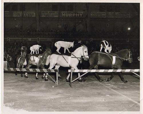 pony dog circus