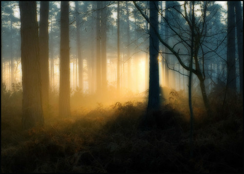 morning trees light shadow mist cold silhouette fog forest sunrise frost olympus bosque wald foret forests bracknell e510 platinumphoto forêt topofthefog theperfectphotographer alemdagqualityonlyclub