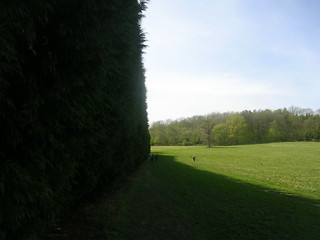 High hedge