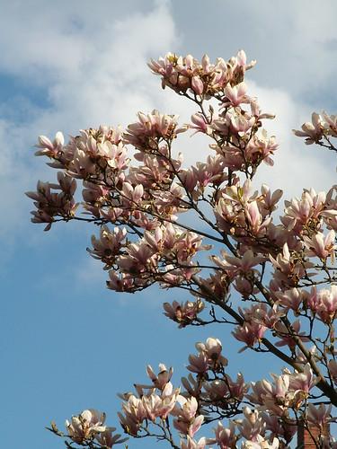 Überall recken Blumen ihre Blüten der warmen Sonne entgegen, wie schön die Welt der Pflanzen ist und wieviel Pracht in den kleinsten Dingen 0169