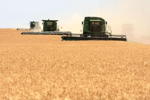 John Deere Combines In The Field