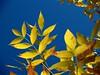 Cielo y hojas