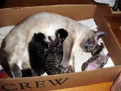 homemade nest box for cats