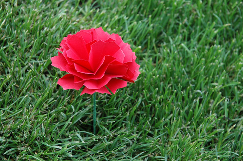 Paper Carnation 1 Photos | In the Grass | 054