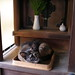 Today's Cat@20071110 by masatsu