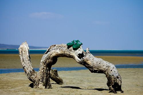 "Djibouti from the book ""Le isole lontane"" by Sergio Albeggiani"