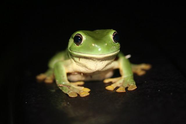 Frog Kitchen Set