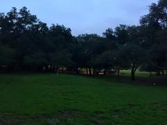 La Crescenta 2017 - 06 Crescenta Valley Community Regional Park
