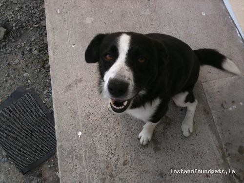 Wed, May 4th, 2011 Lost Male Dog - Tuogh, Cappamore, Limerick