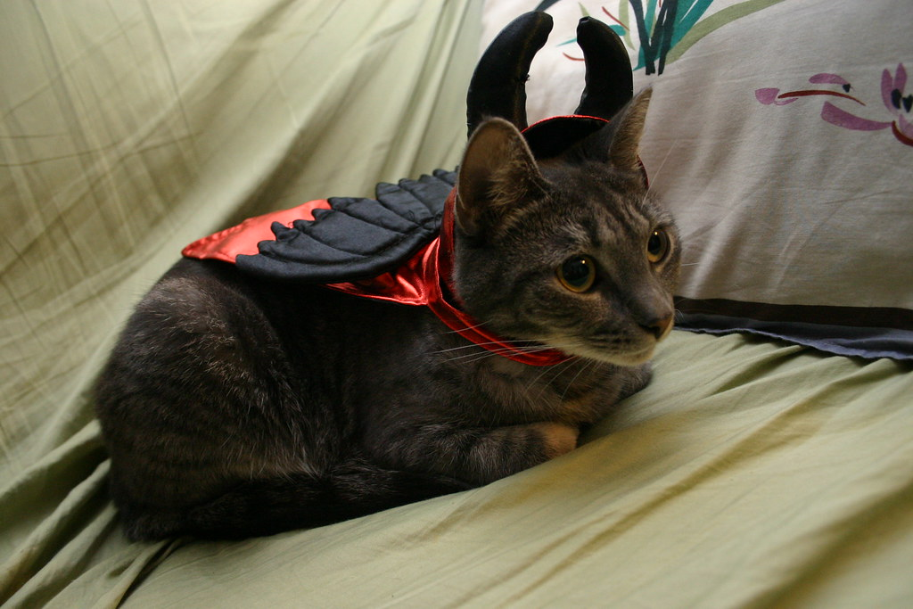 1738316715 080aed90b7 b A Caturday Collection, Cats in Costumes Ready for Halloween