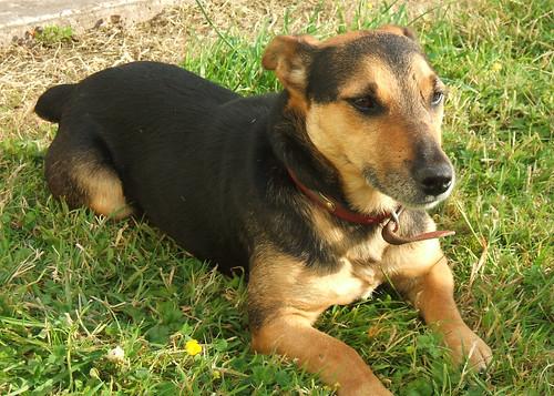 light sunset dog pet brown sun black cute grass golden long glow small friendly