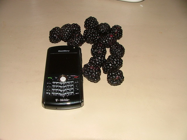 Blackberry fields