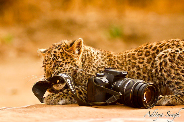 Canon as wildlife sees it - 2