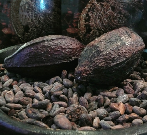 cacao by prima_stella
