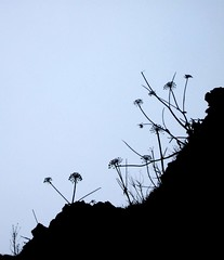 branch, nature, silhouette, line, sky,