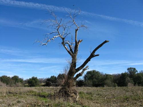 california blue trees sky nature landscape bright blm g9 genine powershotg9