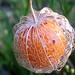 Fruto capturado