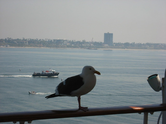 Photo:Queen Mary, (pet?) Sea Gull.  He wasn't bothered the least bit that we were only 8 feet away. By rockman13