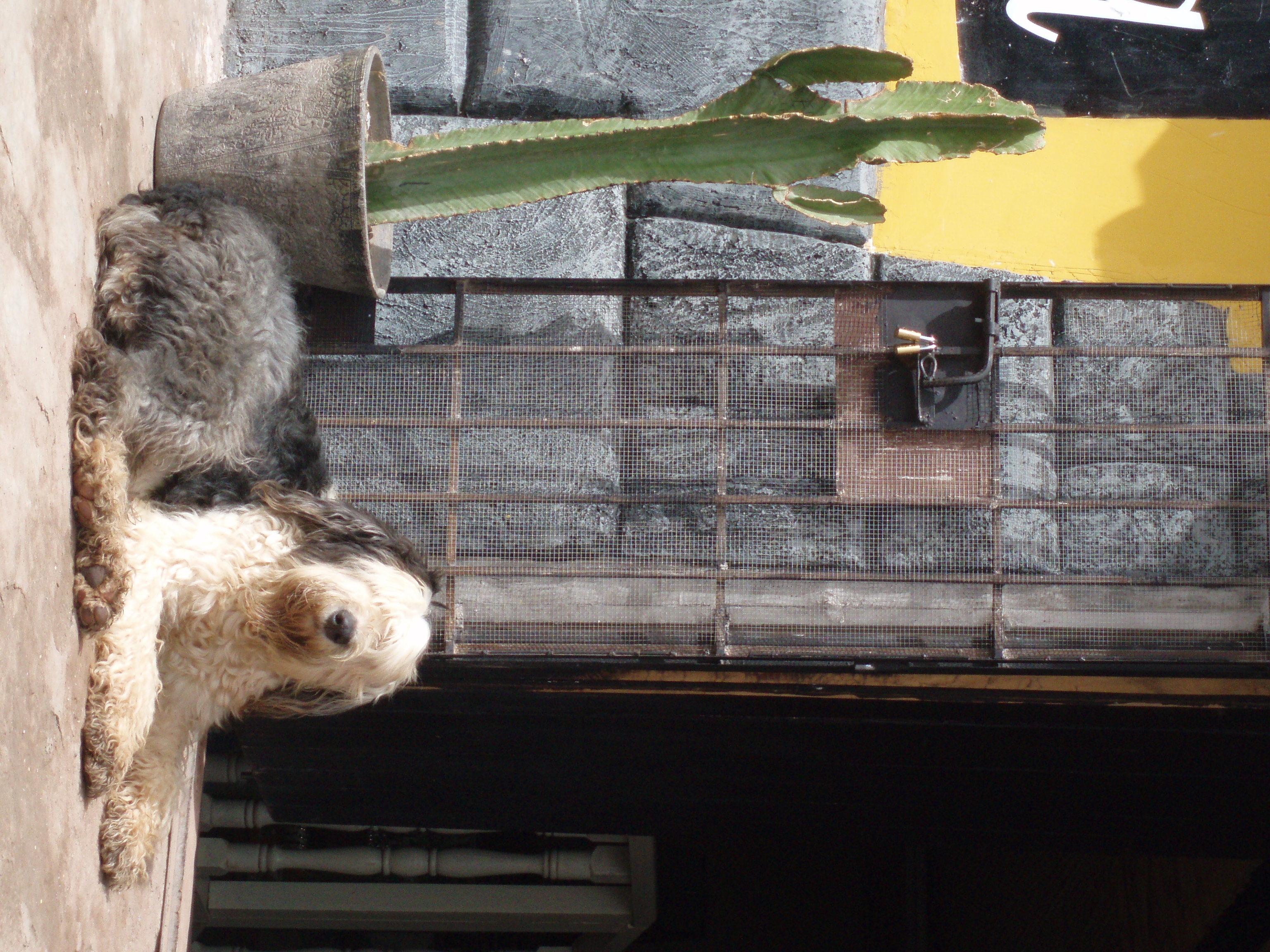 Peruvian Restaurant Near Garfield Nj