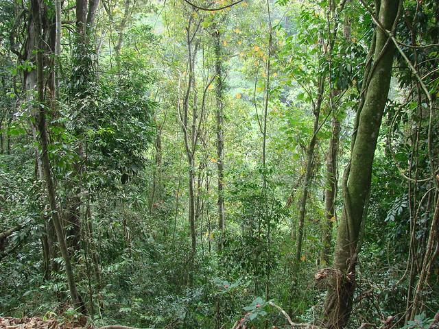 2 - Este es el tipo de vegetación que encontrarán aquí: bosque decíduo de montaña.