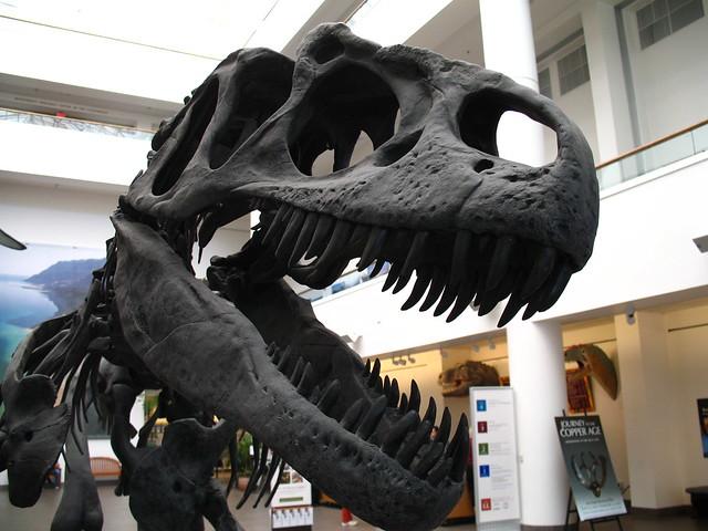 Header of allosaur