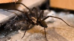arthropod(1.0), animal(1.0), spider(1.0), invertebrate(1.0), insect(1.0), macro photography(1.0), fauna(1.0), close-up(1.0), tarantula(1.0), wolf spider(1.0),