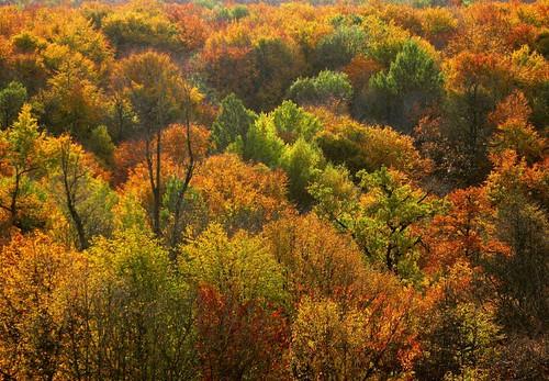 autumn-in-thuringia