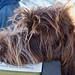 Abbie's Head