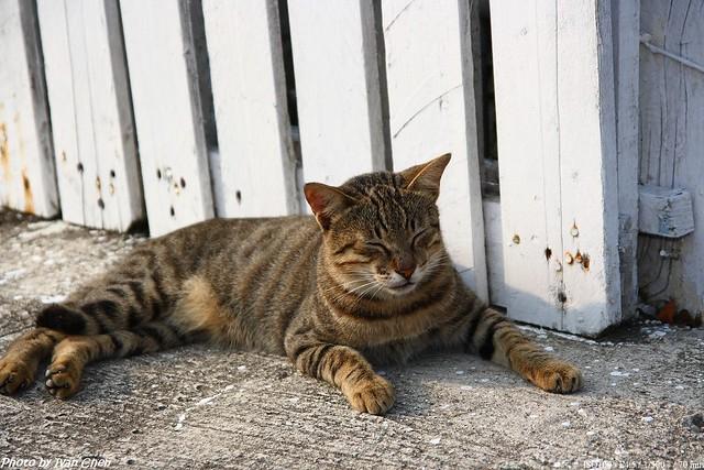 Cat-打瞌睡