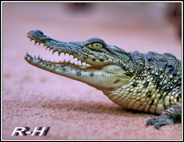 التمساح : عالم الحيوان والنبات