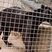 San Diego Zoo 043